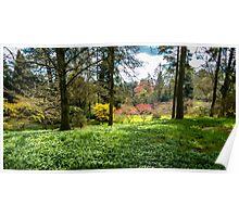 Spring Woodland Poster