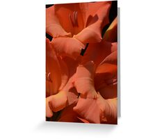 Gladiola in orange hued glory Greeting Card