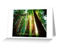 Northern California,Humboldt County And Redwood Trees Greeting Card