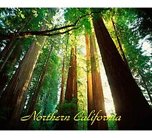 Northern California,Humboldt County And Redwood Trees Photographic Print