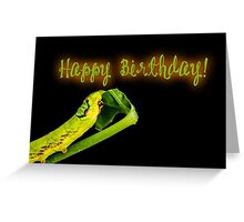 Happy Birthday - Caterpillar Greeting Card