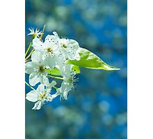 Beautiful Blooms Photographic Print