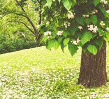 Tree Blossoms - New York Sticker