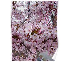 Japanese cherry mountain Poster