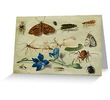 Insects and garden pansy, . Jan van Kessel the Elder 3 Greeting Card
