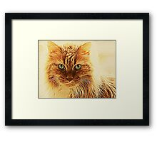Marmalade Cat With Curvy Whiskers Framed Print