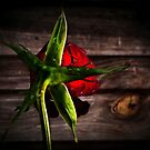 A rose by any other name... by iamelmana