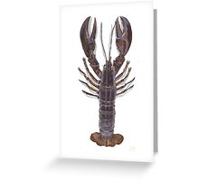 Common Lobster on white Greeting Card