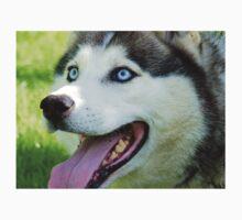 Micky Blue Eyes -Siberian Husky Dog - NZ One Piece - Long Sleeve