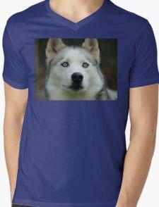 Look Into My Baby Blues!!! - Siberian Husky - NZ Mens V-Neck T-Shirt