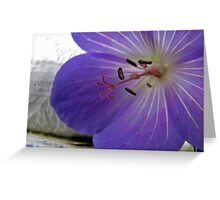 Geranium up close & personal Greeting Card