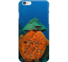 agelas clathrodes caribbean sea iPhone Case/Skin