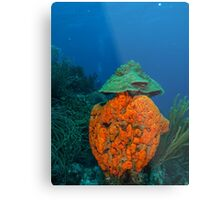 agelas clathrodes caribbean sea Metal Print