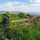Coastal Path Overlook by Susie Peek