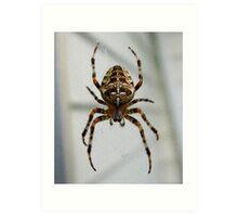 Cross Spider Art Print