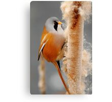On The Winter Forage Canvas Print