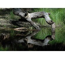 Reflections In A Part-time Pool,Royal National Park Photographic Print