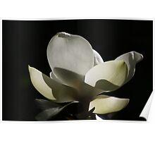 Magnolia 1816 Poster