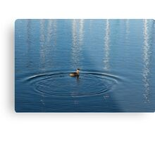 Ripples and Circles – Red-Necked Grebe Metal Print