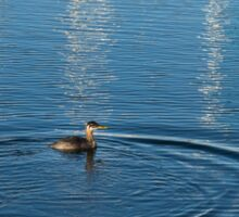 Ripples and Circles – Red-Necked Grebe Sticker