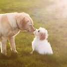Puppy love by heatherbyrne