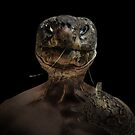 Tortoise No Hair by Randy Turnbow