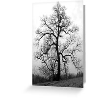 a great old tree Greeting Card