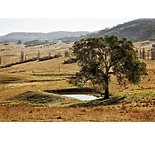 Lone Tree on the way to Tidbinbilla/ACT/Australia Photographic Print