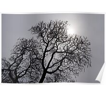 Pearly Silver Sky Filigree Poster