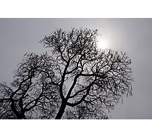 Pearly Silver Sky Filigree Photographic Print