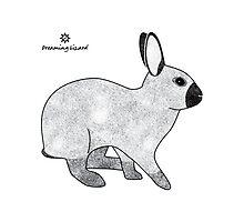 Rabbit Champagne D'Argent Photographic Print