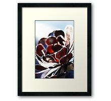 Succulent  in the Spotlight Framed Print