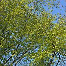 Blue Sky and Green Leaves by Kathryn Jones