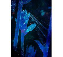 Cosmic Web Photographic Print