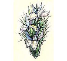 Beautiful iris - Hand draw  ink and pen, Watercolor, on textured paper Photographic Print