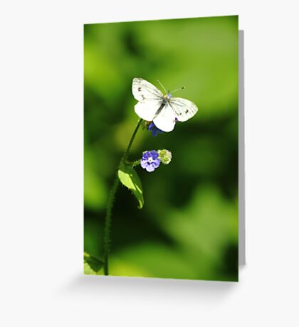 Forget-Me-Not Butterfly Greeting Card