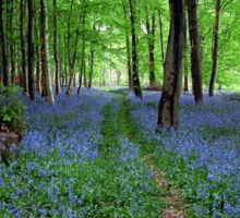 Bluebell Forest, East Sussex Sticker