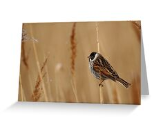 Reed All About It Greeting Card