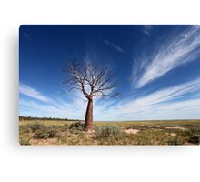 Lonely Boab Canvas Print