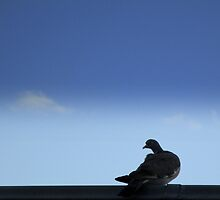 Pigeon and cloud by Janet GATHIER-COOMBER