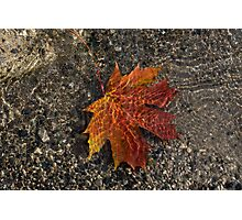 Autumn Colors and Playful Sunlight Patterns - Maple Leaf Photographic Print