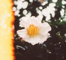 White Camellia Blossom Sticker