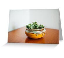 Succulents in ceramic bowl Greeting Card