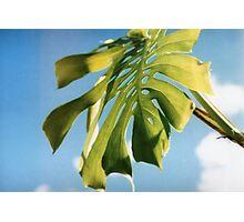 Monstera Leaf Photographic Print