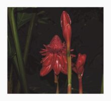 Red Torch Ginger Lily - Glossy, Exotic and Wonderful One Piece - Short Sleeve