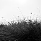 Button Grass by Kylie Reid