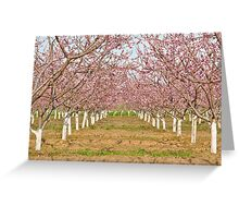 Pink on White Greeting Card