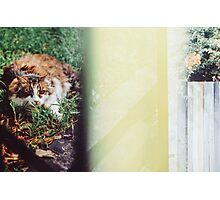 Cat lying in the grass Photographic Print