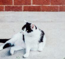 Black & White Cat Sticker