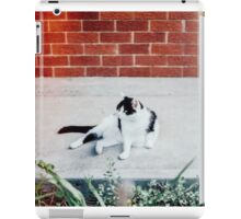 Black & White Cat iPad Case/Skin